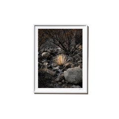 Yucca, 2017, from the Survivors series (Framed Color Landscape Photography)
