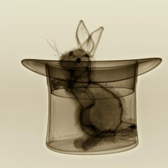 Magic With -contemporary black and brown rabbit in hat inkjet print on paper