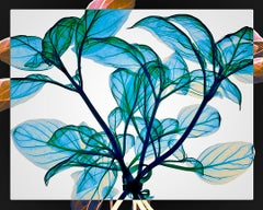Tied Basil - contemporary blue leaves inkjet xogram x-ray photo dibond print
