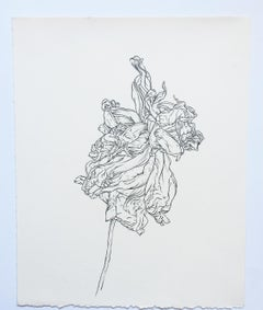Plant Drawing #8, Original Contemporary Graphite Drawings of Modern Botanicals