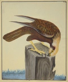 """""""Osprey,"""" William Lewin, Old Master, original gouache, realist, natural history"""