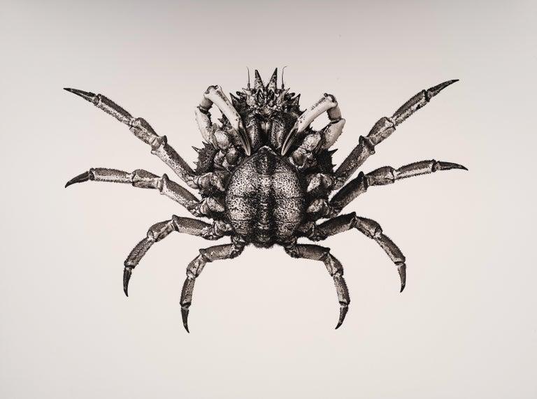 Jan C. Schlegel Still-Life Photograph - Carcinus Maenas, Platinum Iridium Print, Photography, Contemporary