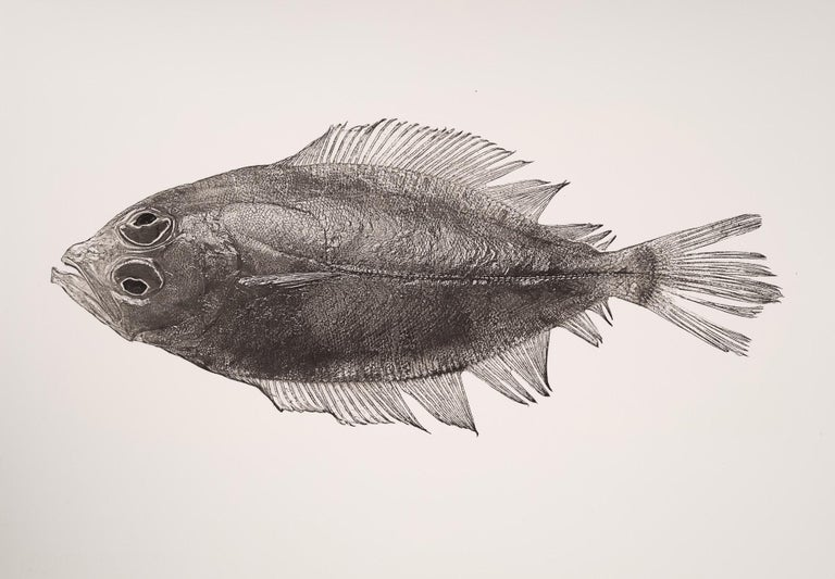 Jan C. Schlegel Black and White Photograph - Pleuronectes Platessa, Platinum Iridium Print, Photography, Contemporary