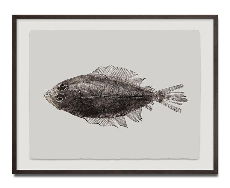 Pleuronectes Platessa, Platinum Iridium Print, Photography, Contemporary - Beige Black and White Photograph by Jan C. Schlegel