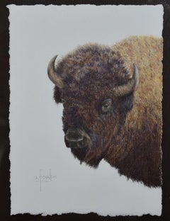 """Great Plains Heritage"" Shoulder Mount Buffalo Bison Drawing"