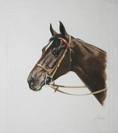Cheval ( horse head ) – Frontal Rouge by J. Rivet original etching
