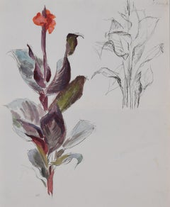 Rosemary Ellis flower painting 1950s Canna Lily gouache New Naturalists nature