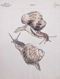 Rosemary Ellis Snail watercolour Modern British Art Wildlife Mid Century Modern