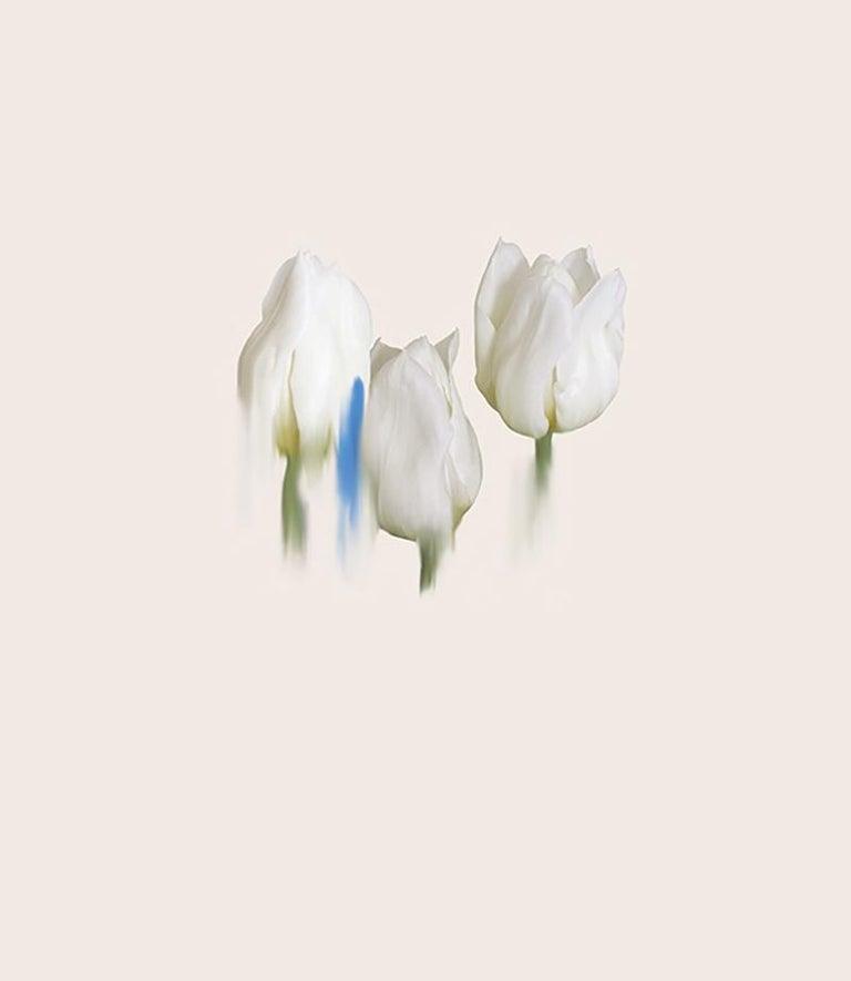 Forgiveness 1 - Botanical fine art print by British Artist Simone Webb - Photograph by Simone Webb