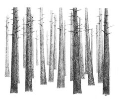Pine Tree Woods A Contemporary Landscape drawing in Charcoal