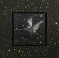 Swan by starlight