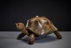 Contemporary Life size Wildlife Patinated Sculpture 'Tortoise' by Tobias Martin