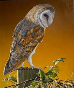 Realist Painting of a Barn Owl 'Contemplation'. Wildlife & Animal Portrait