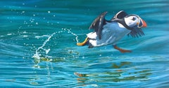 Contemporary Realist Wildlife Painting 'Puffin' by Ben Waddams