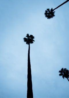 Venice Beach Blue Palmtrees