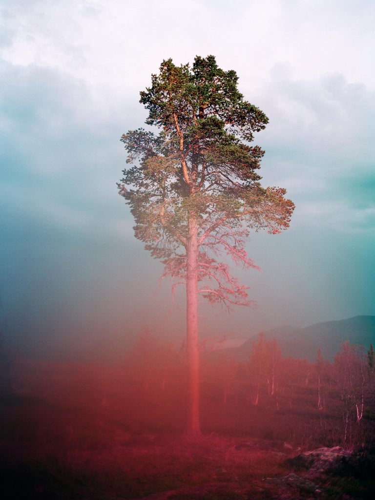 """Tommy Kwak Color Photograph - """"Tree 4"""" - contemporary photograph, nature"""