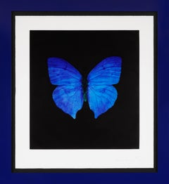 Damien Hirst, Blue Butterfly, Etching, 2008