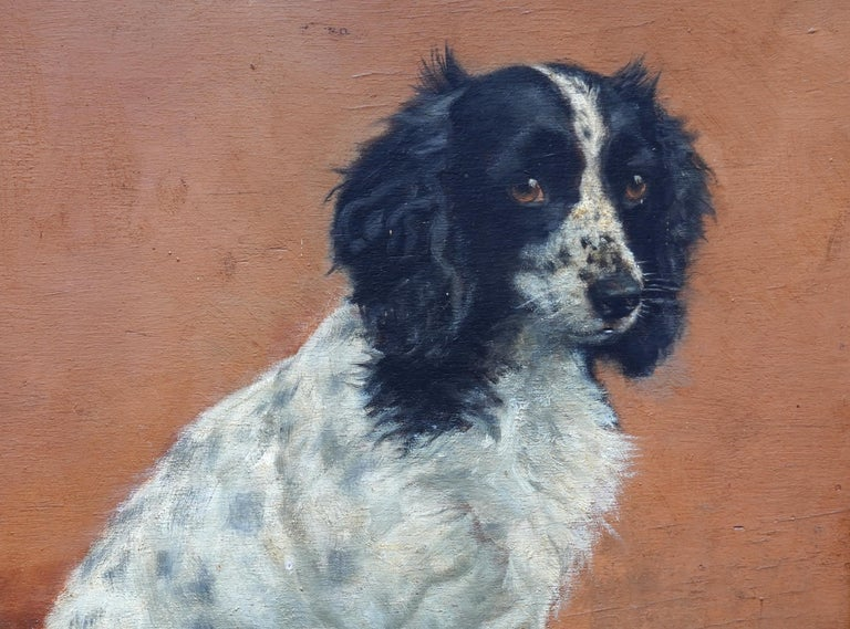 This beautiful British portrait oil painting of a dog is by noted female animal artist Florence Mabel Hollams. Painted in 1943 the painting is of Freda, a black and white Spring Spaniel. As well as being a beautiful dog, Freda was exceptionally