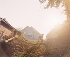 Omaha Sketchbook: Dog on Hill (Sunrise), Omaha, NE - Contemporary Photography