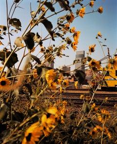 Omaha Sketchbook: Omaha, NE (Downtown Through Sunflowers) - Photography