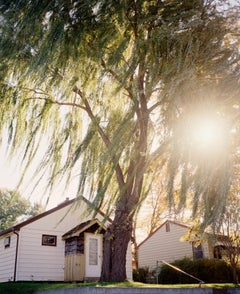 Omaha Sketchbook: Omaha, NE (Sun Through Willows) - Contemporary Photography
