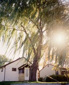 Omaha Sketchbook: Omaha, NE (Sun Through Willows) - Contemporary Photography