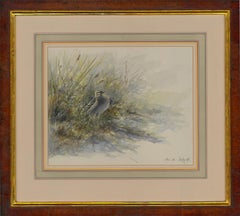 David Daly SWLA - 1992 Watercolour, Great Snipe Displaying