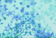 The Fullest Bloom in the Breeze of Periwinkle Blue, Contemporary Photography