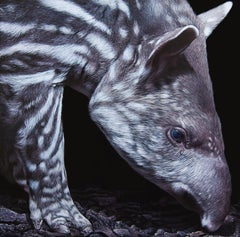 Peau de Terre (jeune tapir), acrylic on medium, size with frame 43 x 43 cm