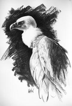 Etude de vautour fauve, charcoal on paper, size with frame 76.3x66.3