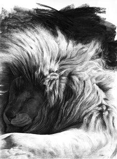 Etude de lion endormi, charcoal on paper, size with frame 118 x 89 cm