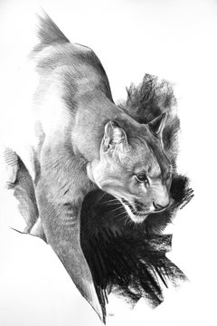 Etude  de cougar, charcoal on paper , size with frame 116 x 87 cm