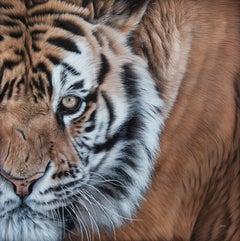 Splandeur d'antan (tigre de sibérie) ,acrylic on canvas,size with frame 68x68 cm