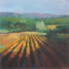 Fields in Sunlight, Provence