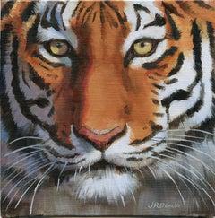 Close-Up Tiger