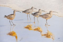 A Sunny Afternoon with Whimbrels
