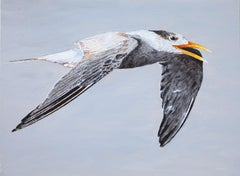 Great Crested Tern #1