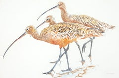 Three Long-Billed Curlews, Original Painting