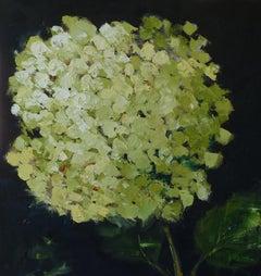 Green Hydrangea, Oil Painting