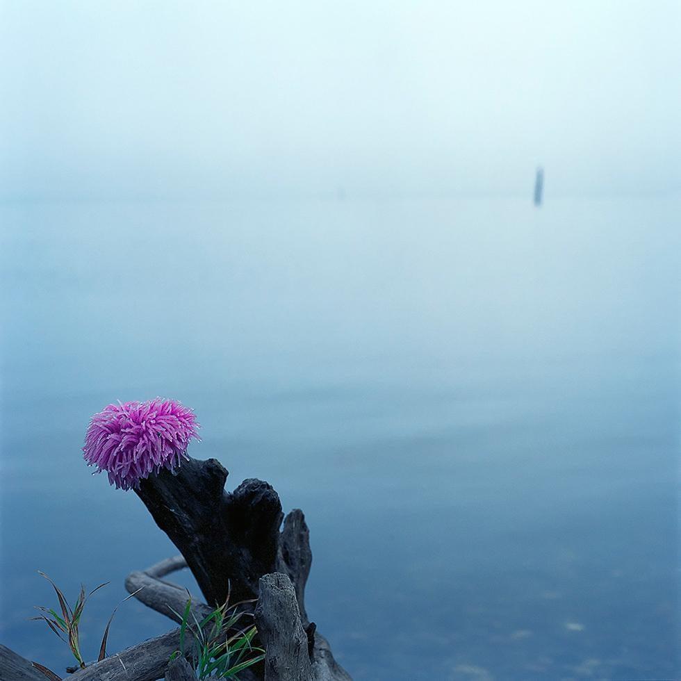 Untitled (Log)