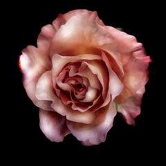 Seductive Rose