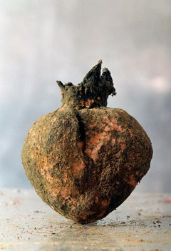 Georg Oddner, From Herbarium, Pomegranate, 1999, Pigment print, Photography