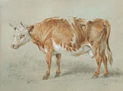 Cow Study - British School 19th Century - Watercolour