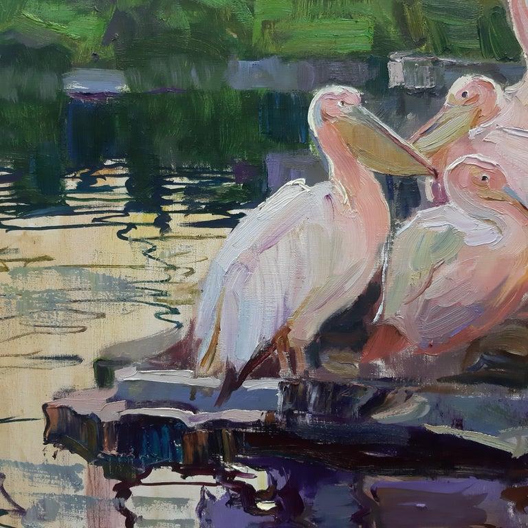 Pelicans  For Sale 1