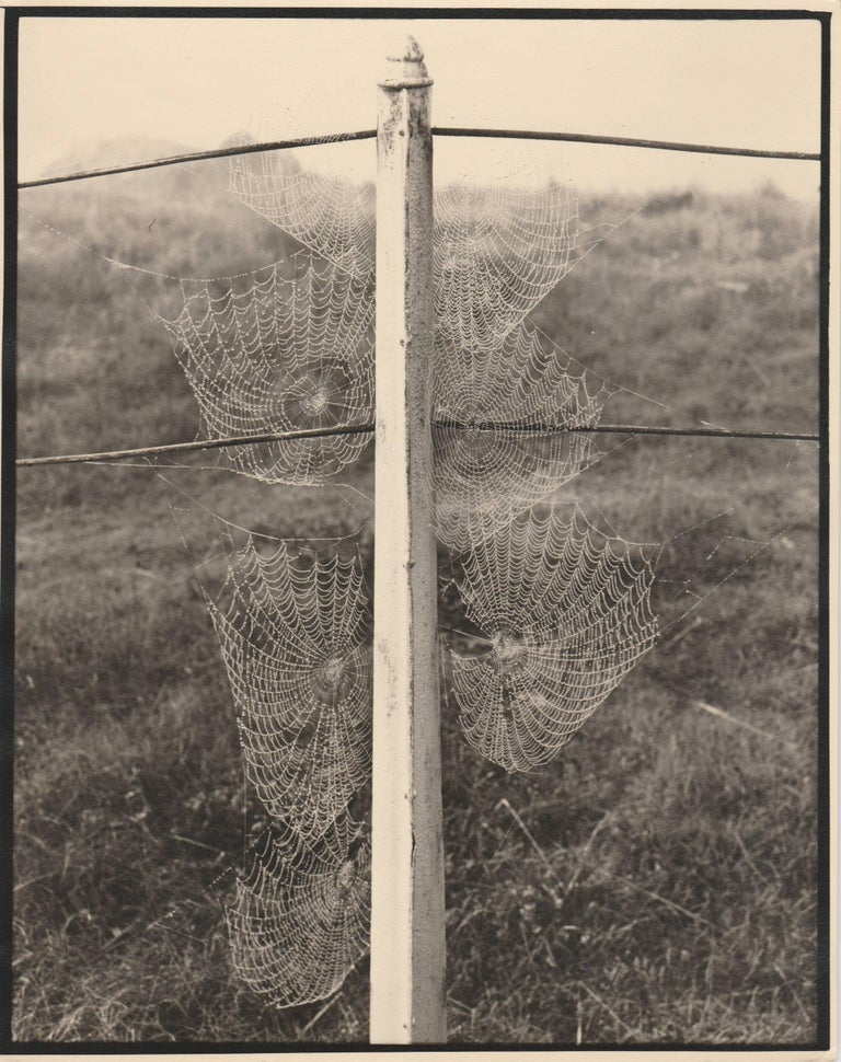 Ack (Jock) Ware Black and White Photograph - Cobweb on an autumn morning