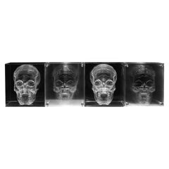 Acrilyc Skull
