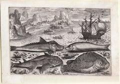 """""""Piscum Vivae Icones,"""" Antique Engraving of Fish, Seascape"""