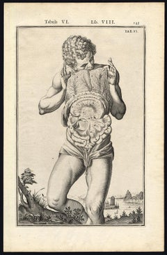 2 anatomical prints - Male abdominal cavity by Spigelius - Engraving - 17th c.