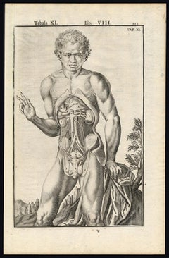 2 anatomical prints - Male organs by Spigelius - Engraving - 17th century