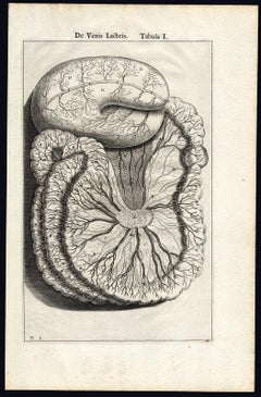 4 anatomical prints - Woman's breast by Spigelius - Engraving - 17th century